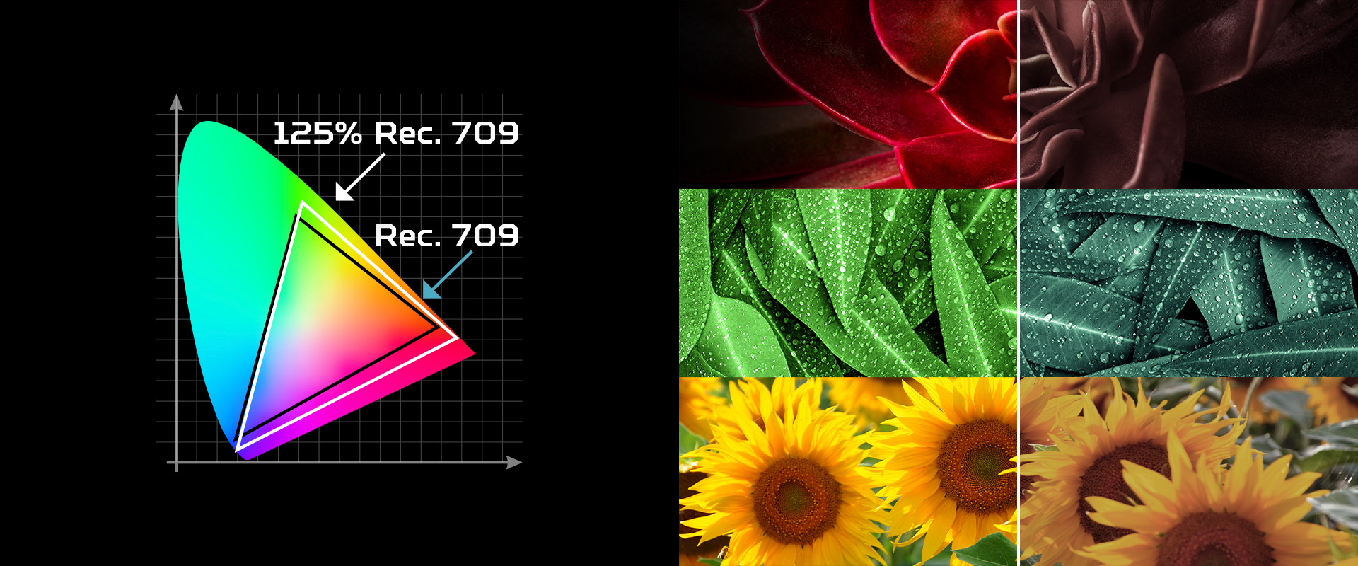 Poprawiona paleta kolorów 125% Rec. 709 - Large